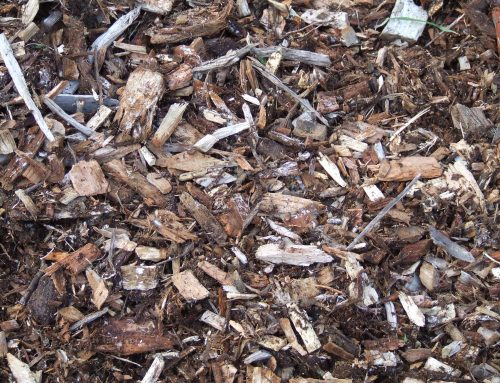 PROS AND CONS OF USING MULCH AROUND YOUR TREES