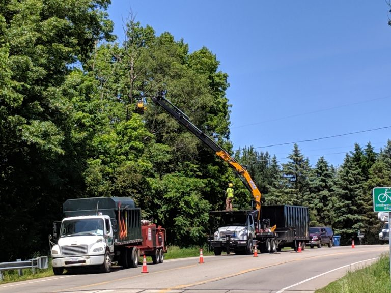 Road Side Tree Removal Image