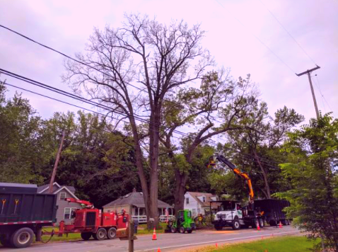 tree trimming and tree removal company