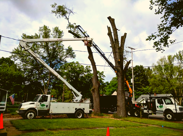 removing trees with bucket and crane trucks